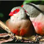Biólogo de Balneário Camboriú lança livro inédito sobre aves catarinenses